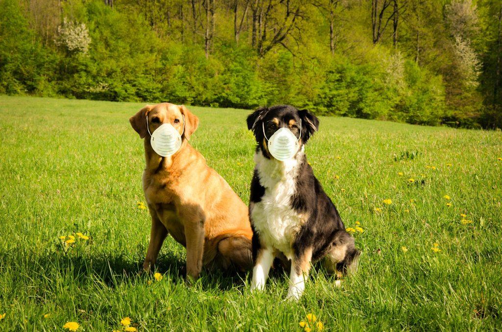 Поиск животных-носителей коронавируса: возможно ли это?