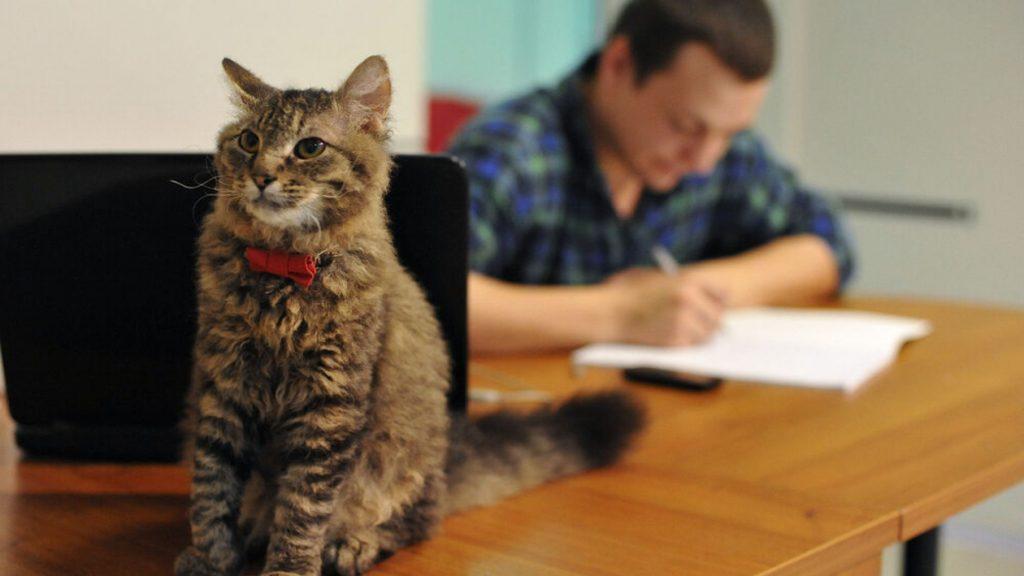 Коронавирус у котов